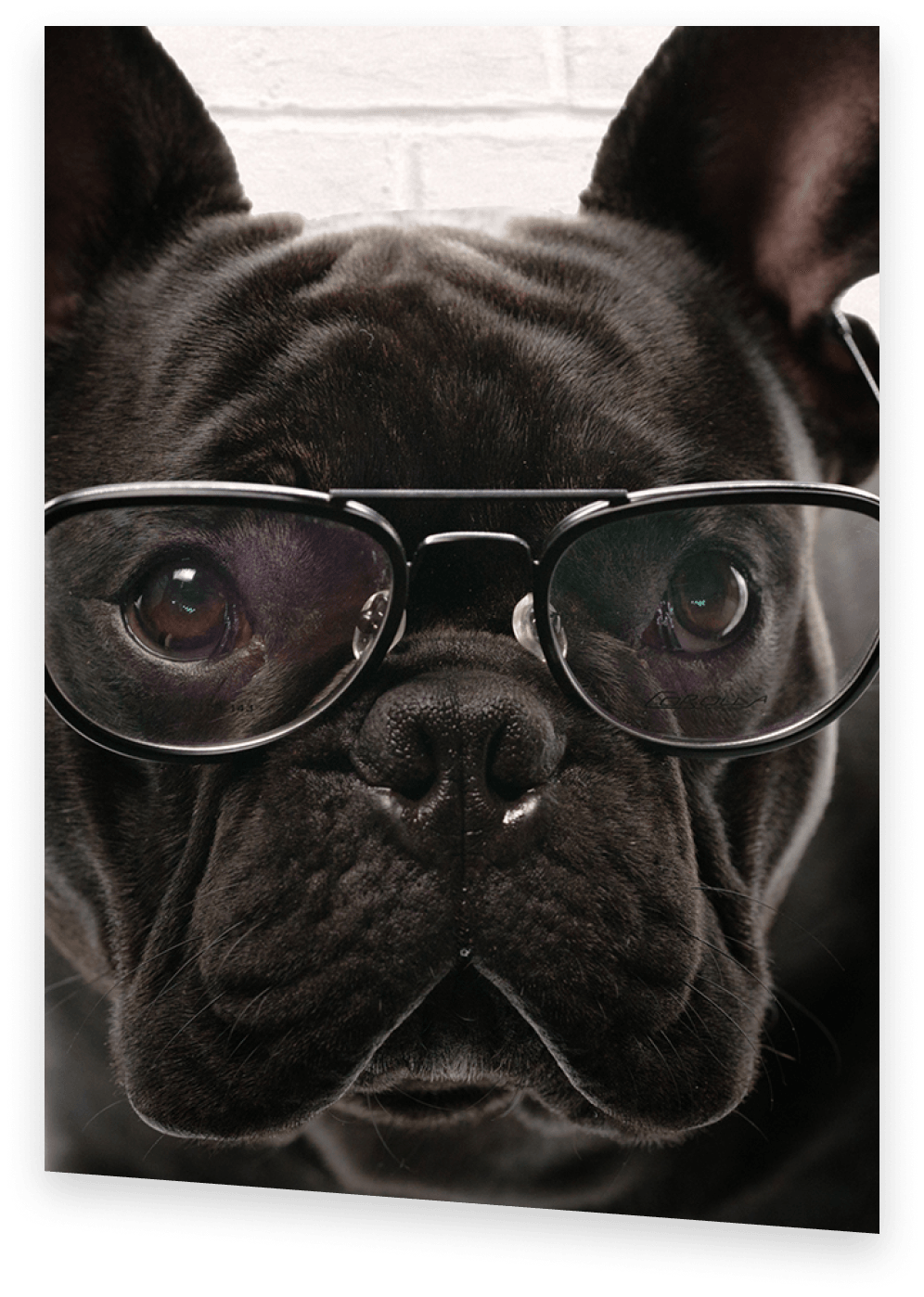ACT Prep Coach Black French Bulldog wearing glasses